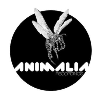 Animalia Recordings - Techno - United States